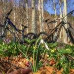 Mountain bikes in the woods